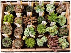 多肉植物の紹介