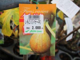 11月入荷中 果樹苗の紹介