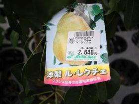 6月入荷中 果樹苗の紹介